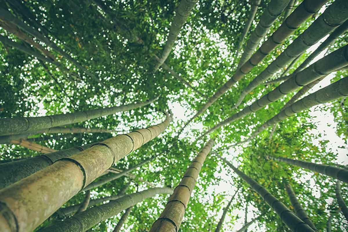 Legno Bambù Certificato, Armony Floor
