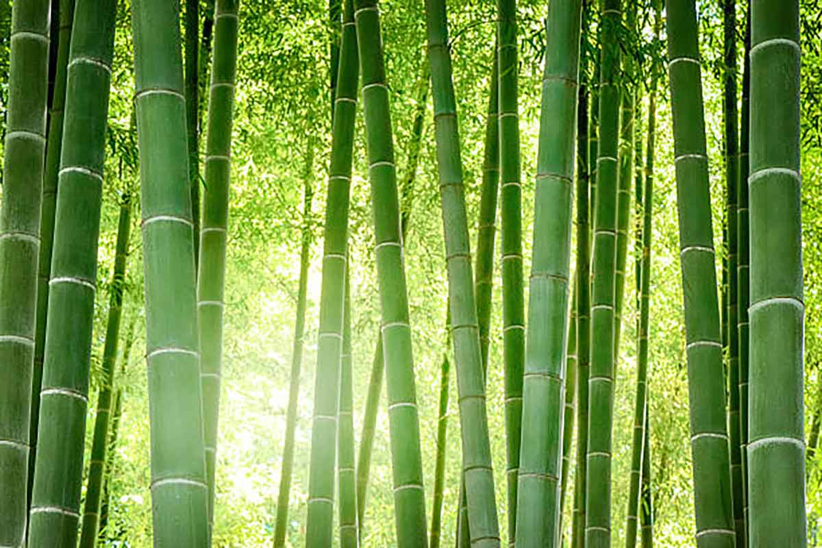 Parquet Bamboo Durezza Resistenza, Armony Floor