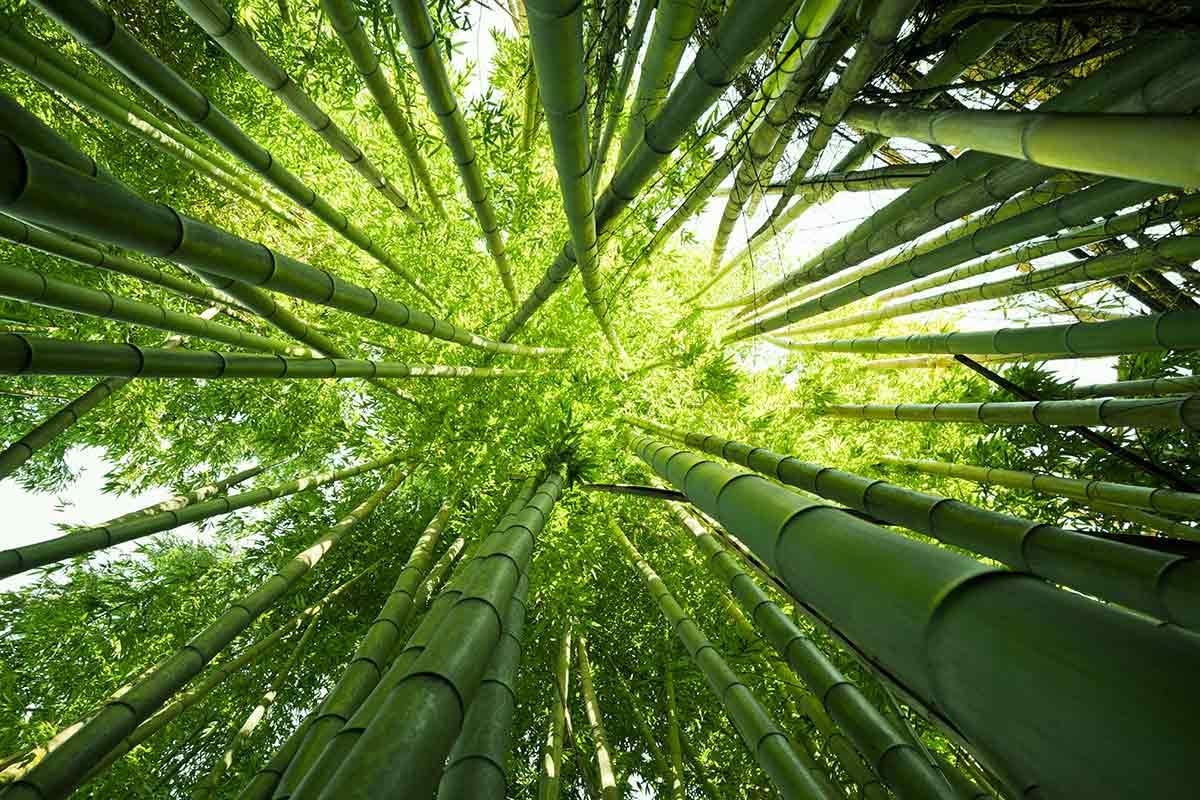 Parquet Legno Bamboo, Armony Floor