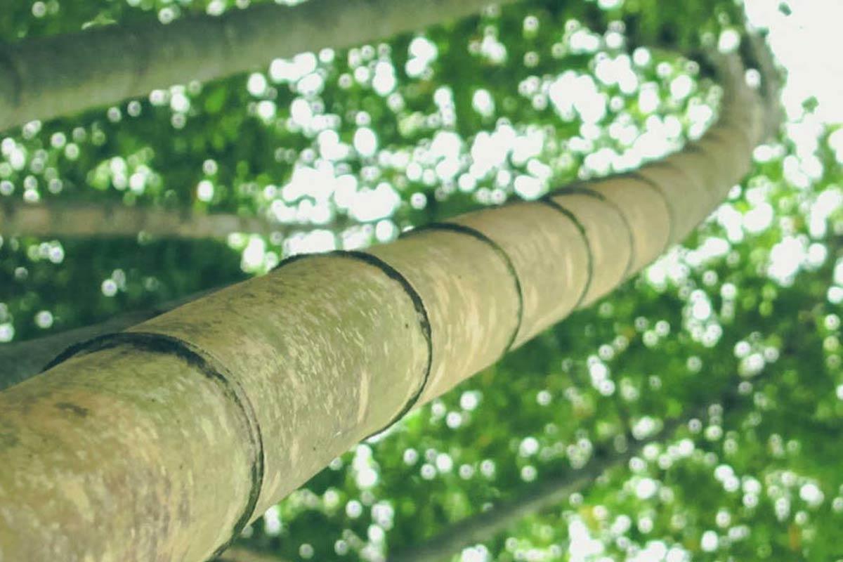 Parquet più Resistente, Bamboo Armony Floor