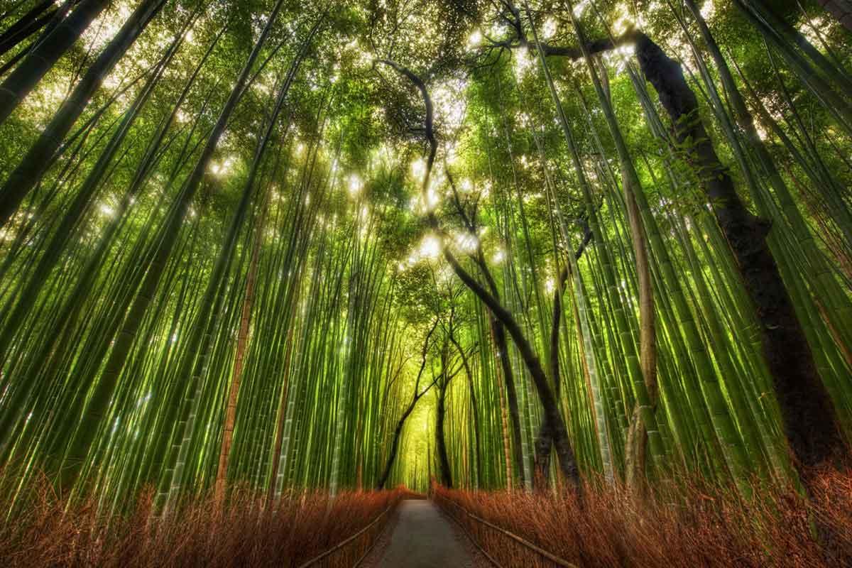 Parquet Resistente ai Graffi, Bamboo Armony Floor