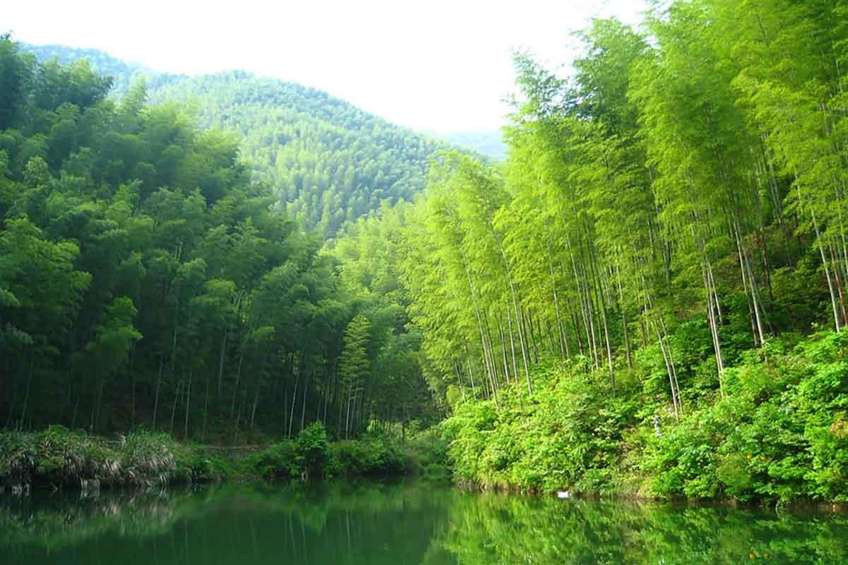 Parquet Resistente all'Acqua, Bamboo Armony Floor