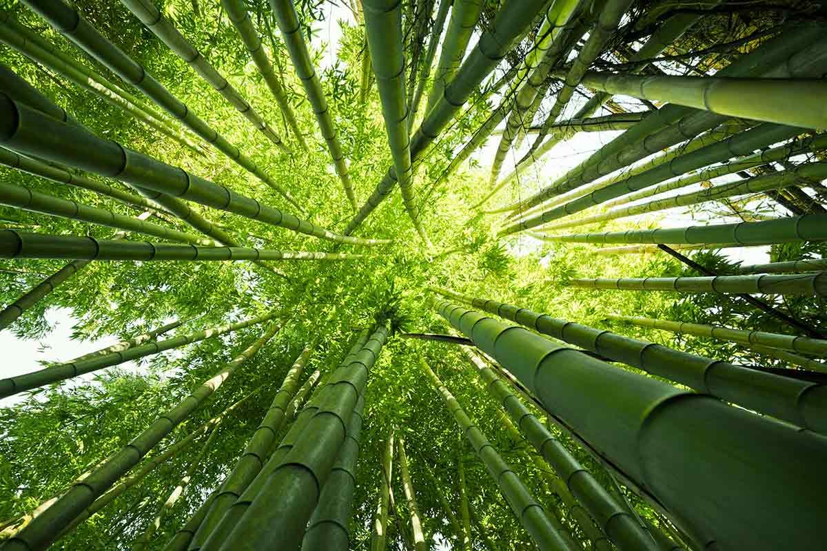 Pavimento Legno Ecologico, Bamboo Armony Floor